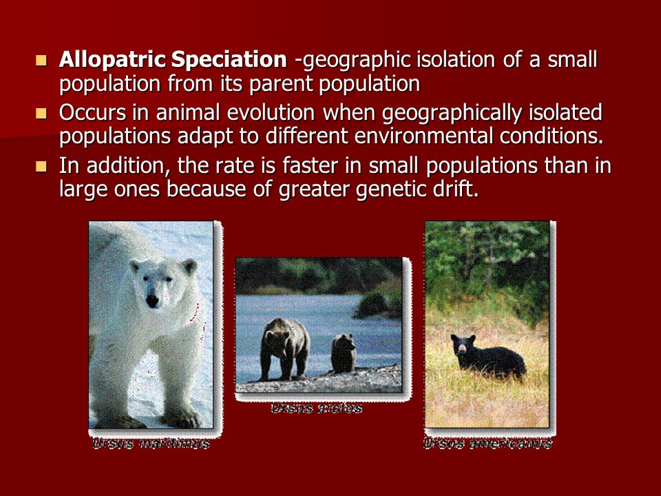 Allopatric Speciation -geographic isolation of a small population from its parent population