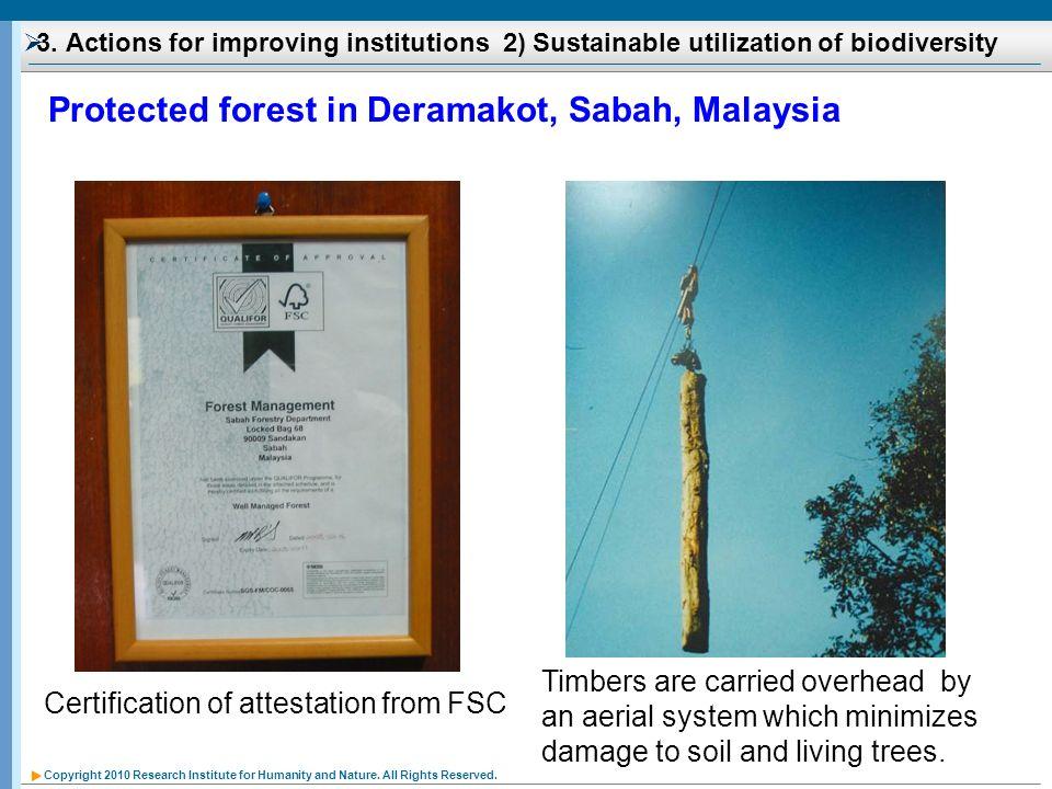 Protected forest in Deramakot, Sabah, Malaysia