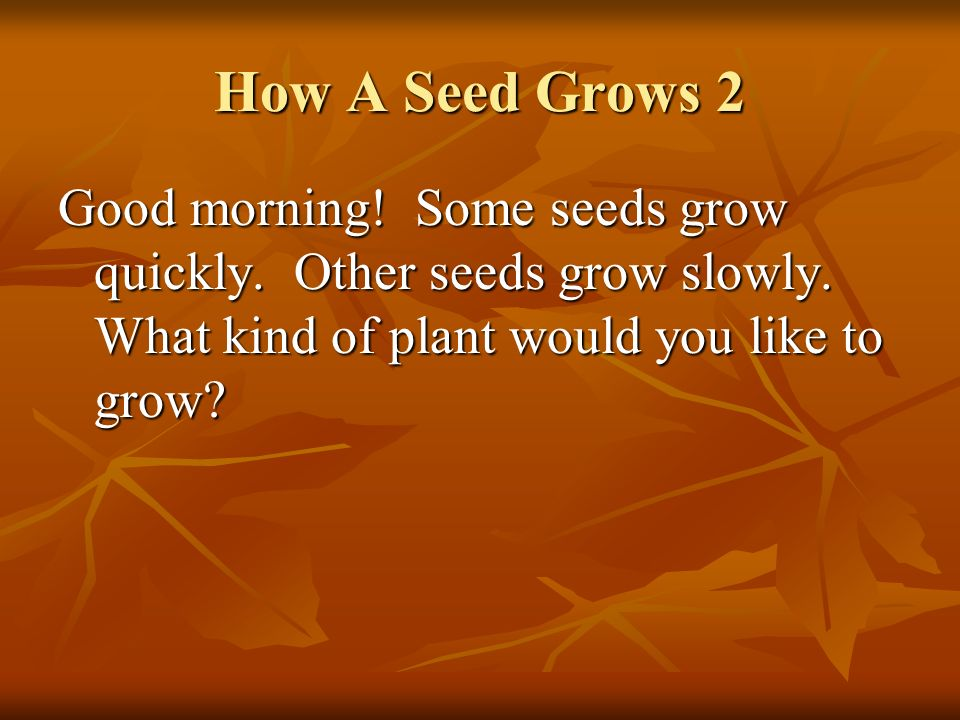 How A Seed Grows 2 Good morning. Some seeds grow quickly.