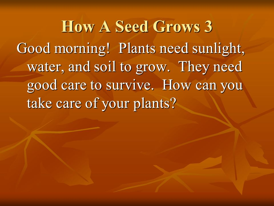 How A Seed Grows 3