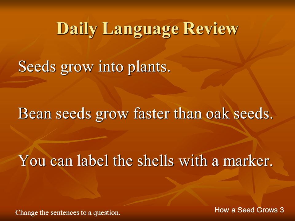 Daily Language Review Seeds grow into plants.