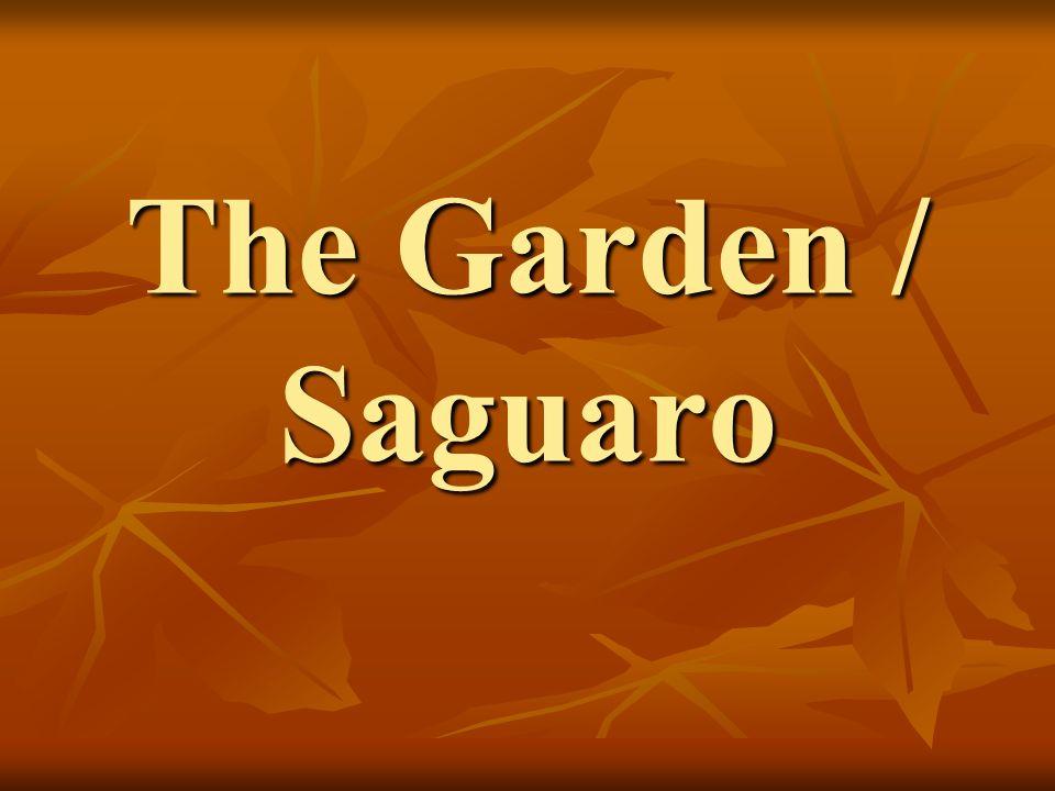 The Garden / Saguaro