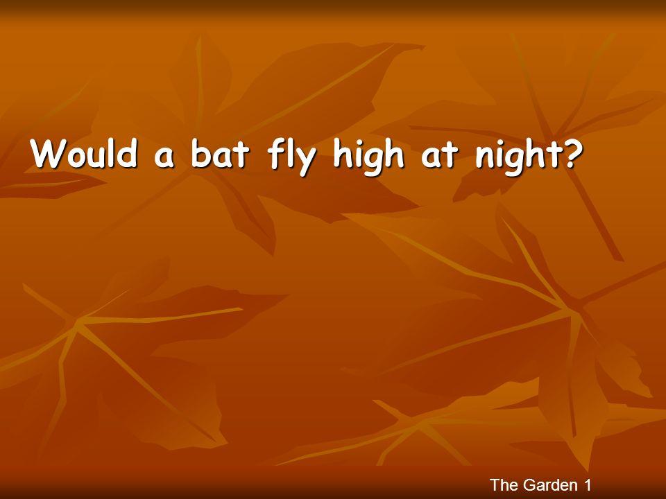 Would a bat fly high at night