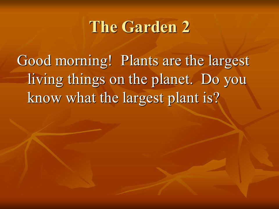 The Garden 2 Good morning. Plants are the largest living things on the planet.