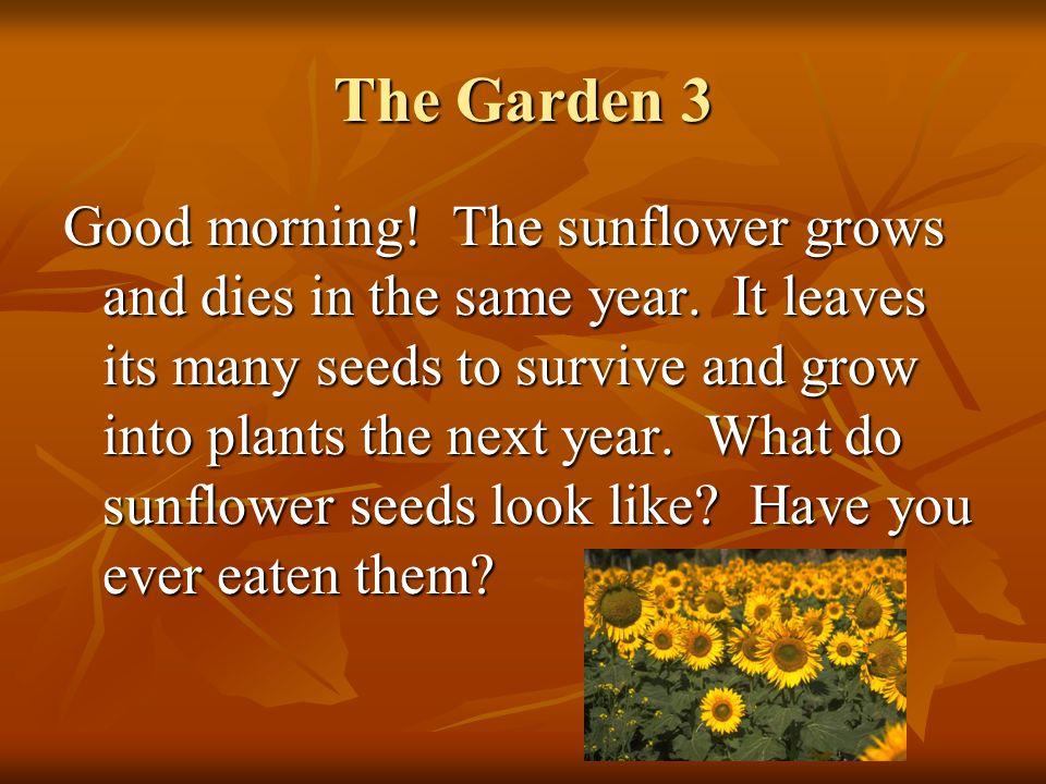 The Garden 3
