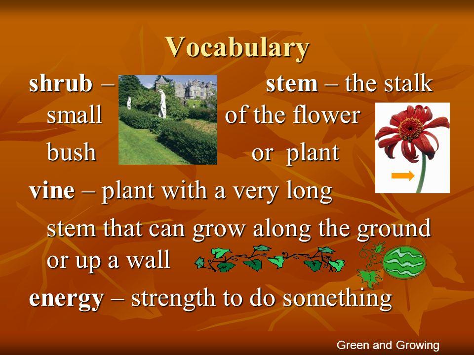 Vocabulary shrub – stem – the stalk small of the flower bush or plant