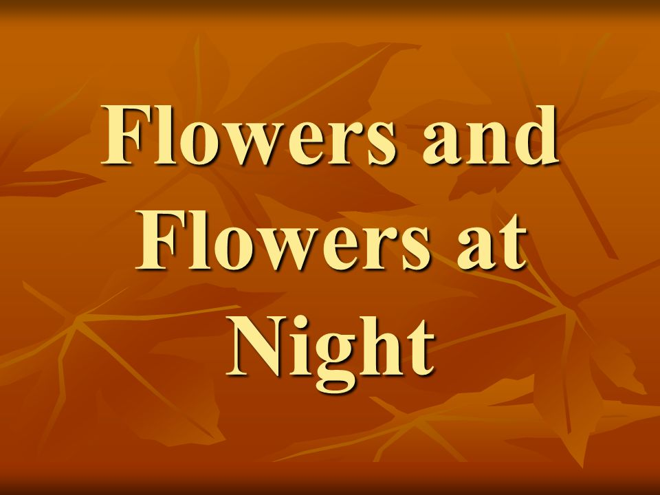 Flowers and Flowers at Night