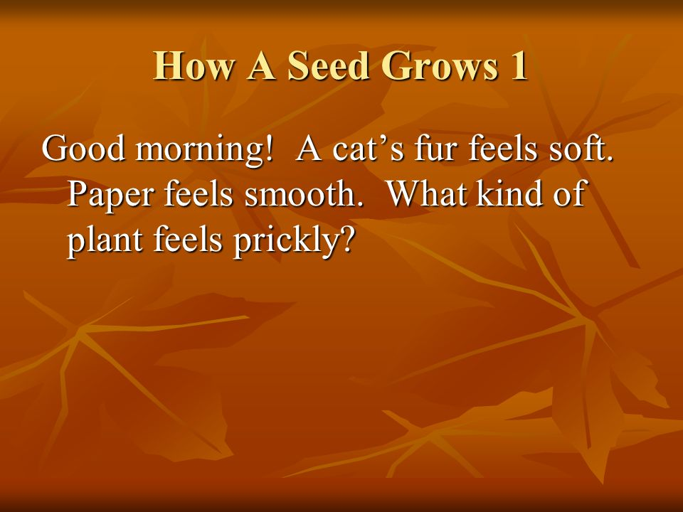 How A Seed Grows 1 Good morning. A cat's fur feels soft.