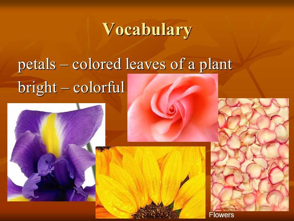 Vocabulary petals – colored leaves of a plant bright – colorful