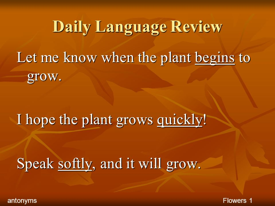 Daily Language Review Let me know when the plant begins to grow.