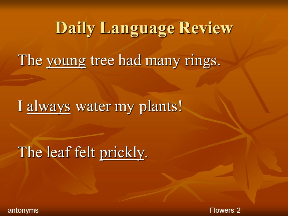 Daily Language Review The young tree had many rings.
