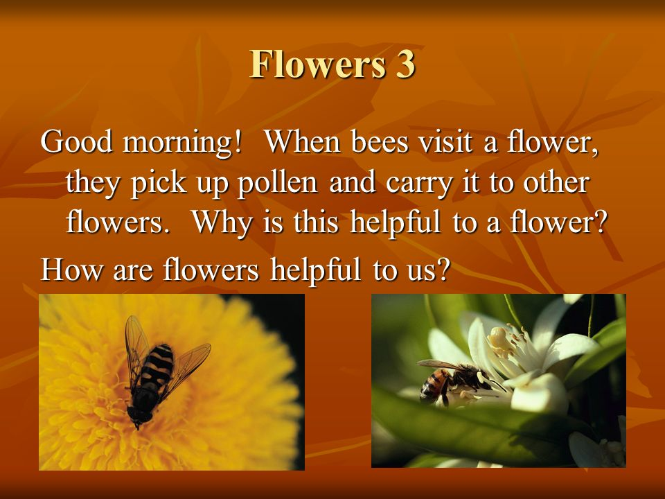 Flowers 3 Good morning! When bees visit a flower, they pick up pollen and carry it to other flowers. Why is this helpful to a flower