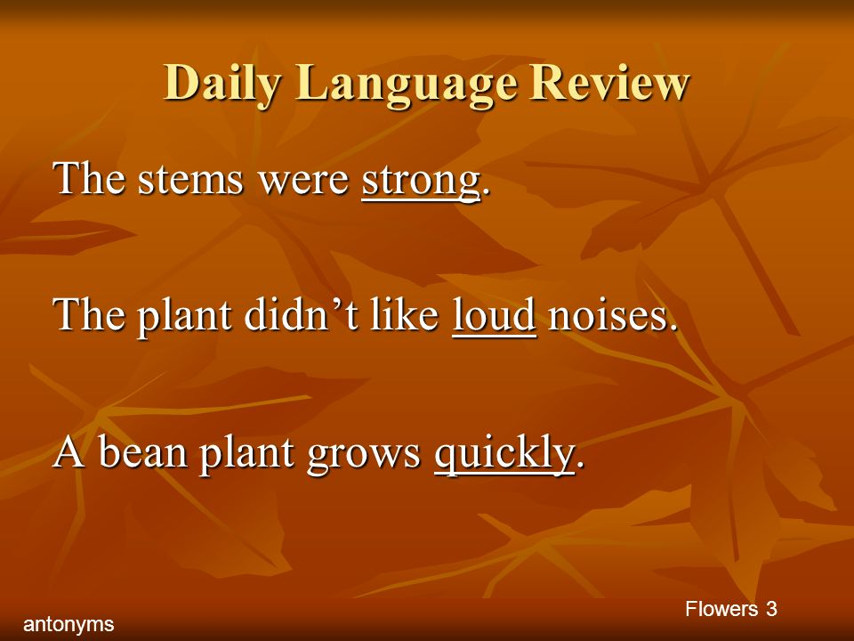 Daily Language Review The stems were strong.