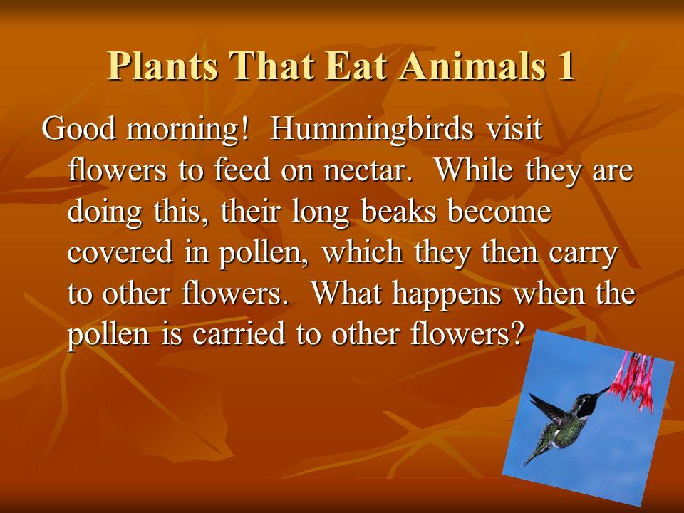 Plants That Eat Animals 1