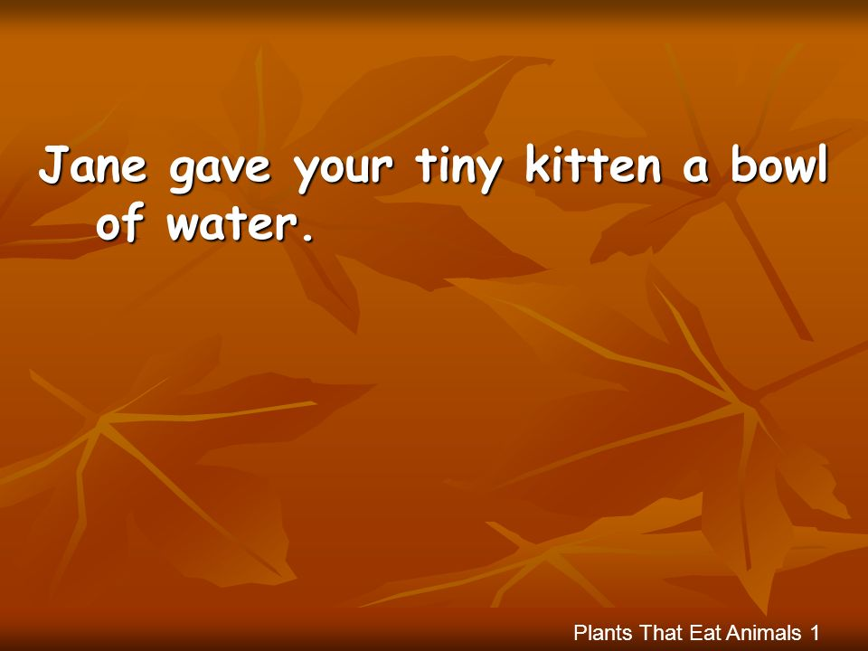 Jane gave your tiny kitten a bowl of water.