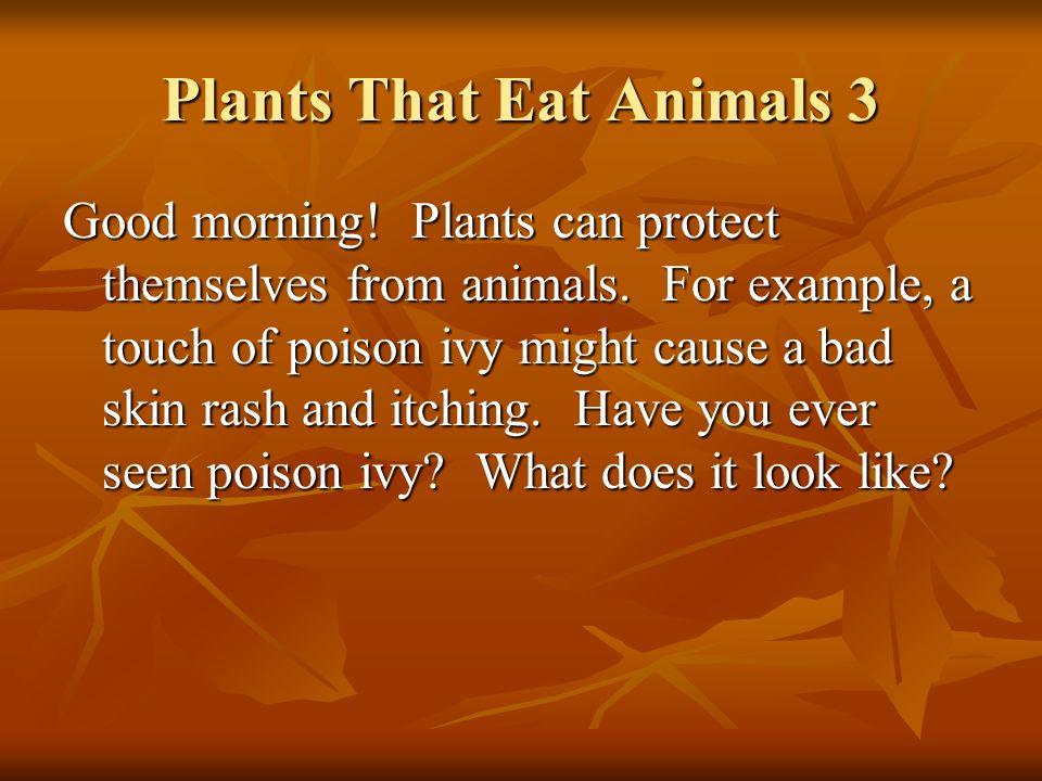 Plants That Eat Animals 3