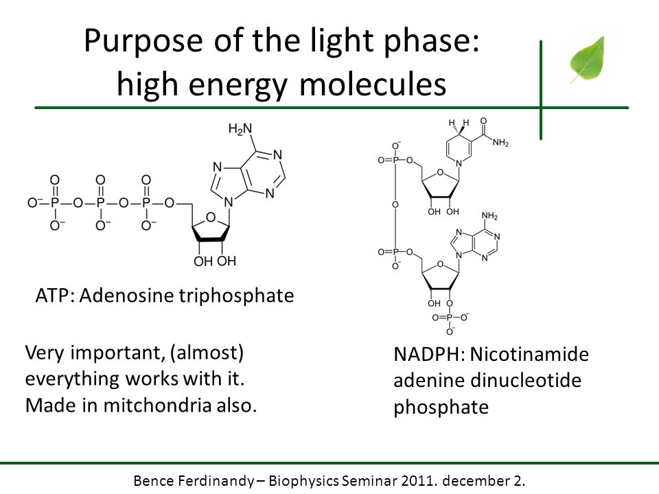 Purpose of the light phase: high energy molecules