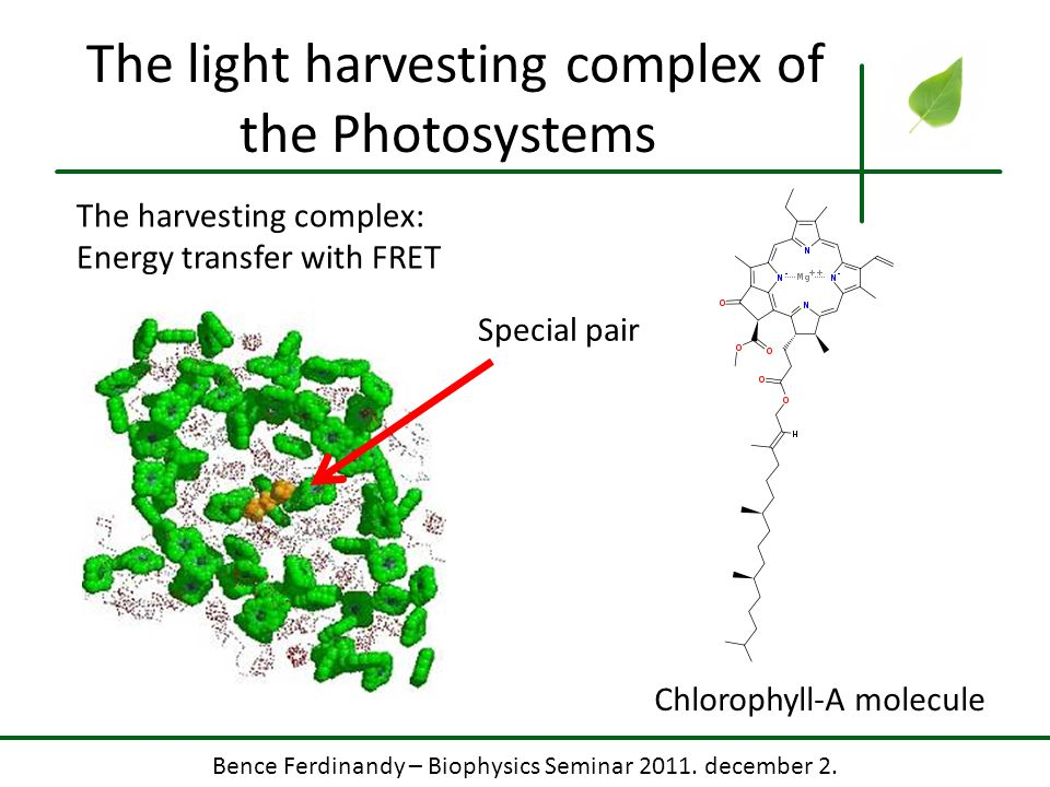 The light harvesting complex of the Photosystems