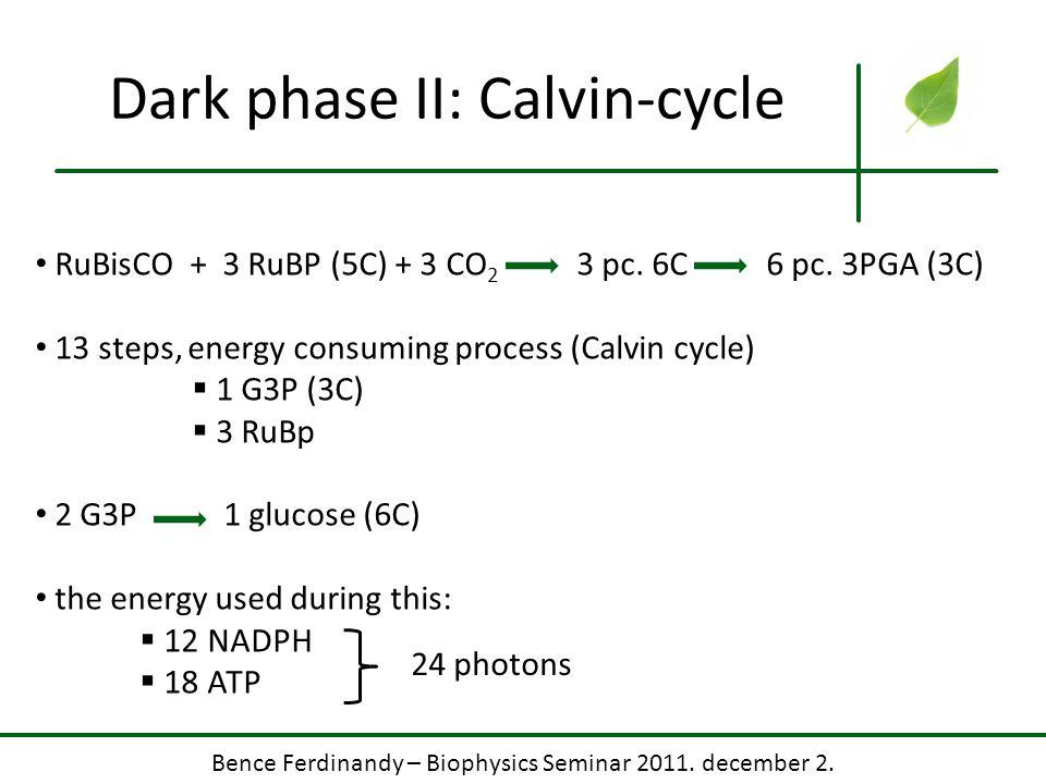 Dark phase II: Calvin-cycle