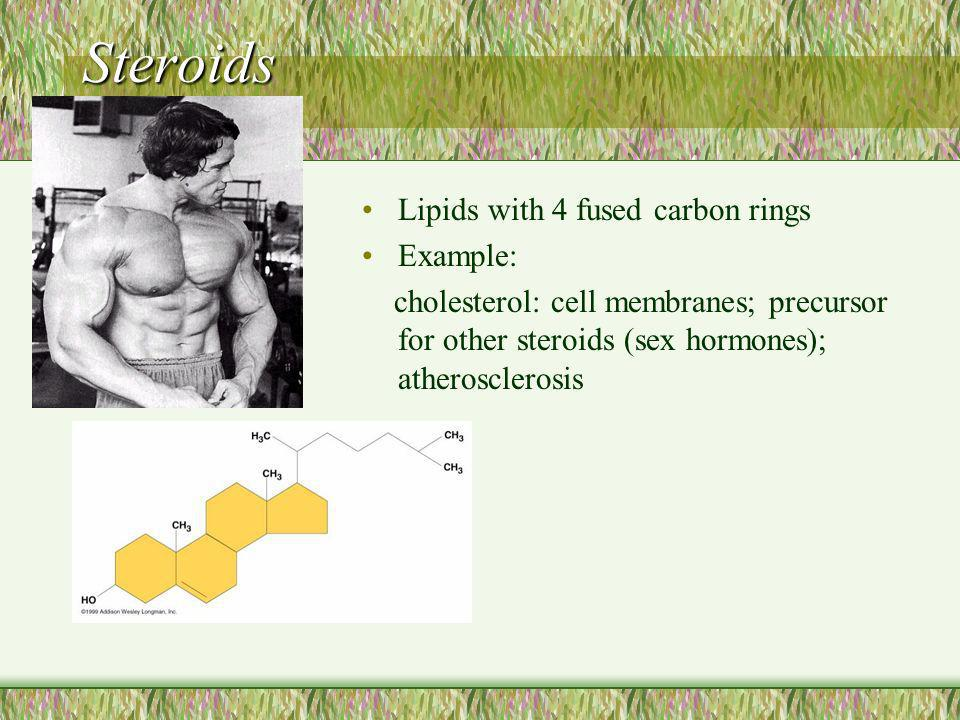 Steroids Lipids with 4 fused carbon rings Example: