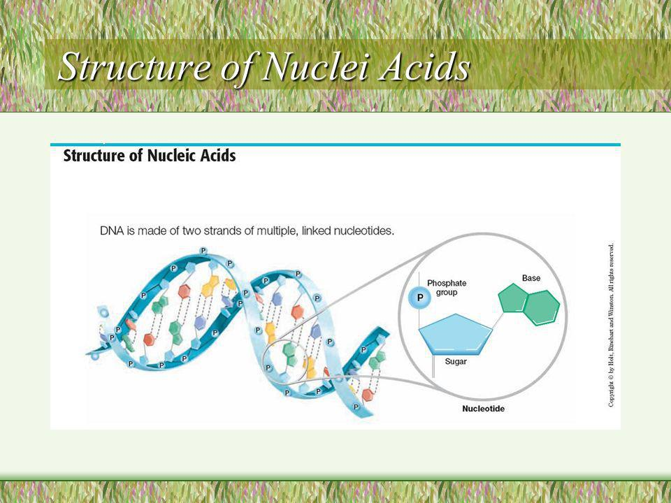 Structure of Nuclei Acids