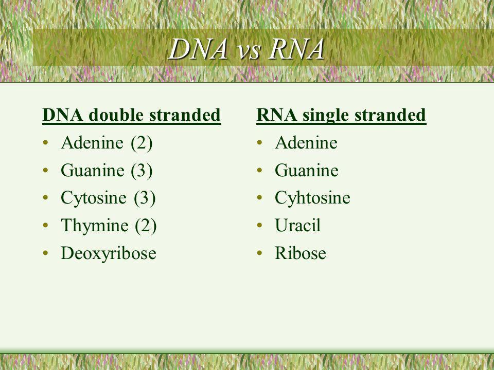DNA vs RNA DNA double stranded Adenine (2) Guanine (3) Cytosine (3)