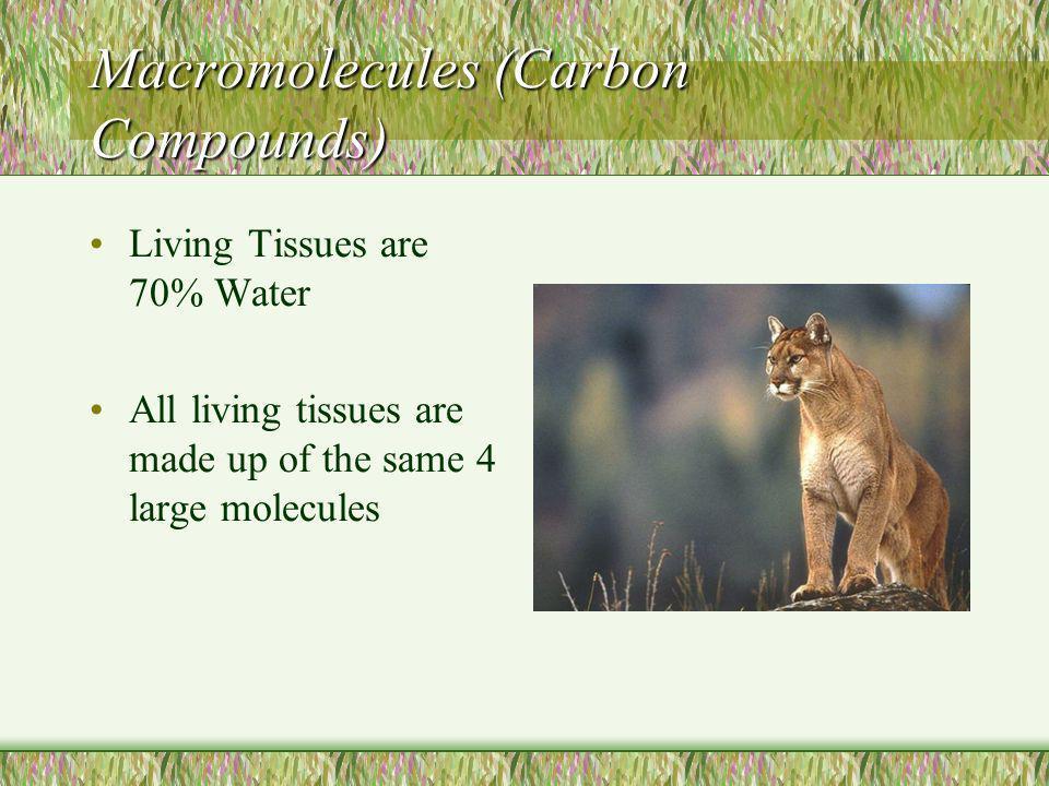 Macromolecules (Carbon Compounds)