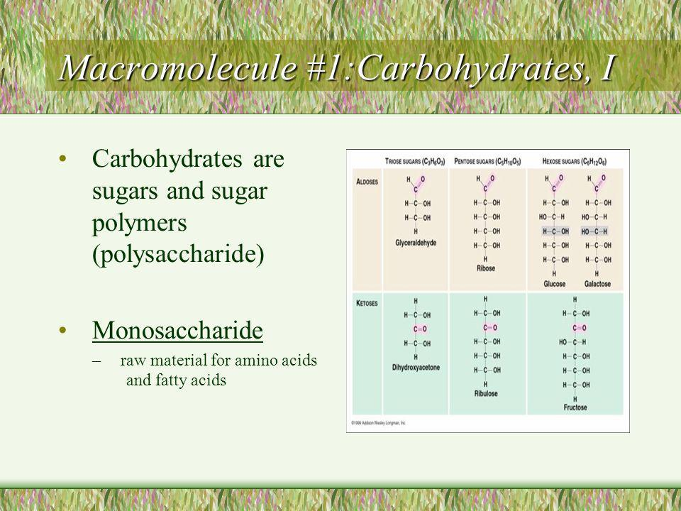 Macromolecule #1:Carbohydrates, I