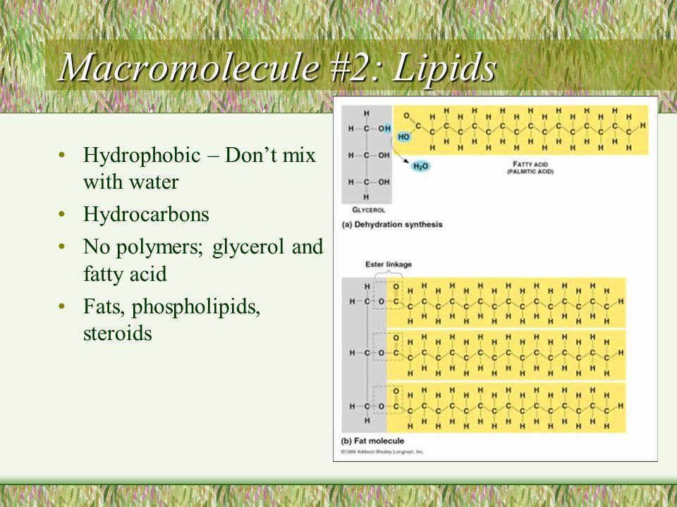 Macromolecule #2: Lipids