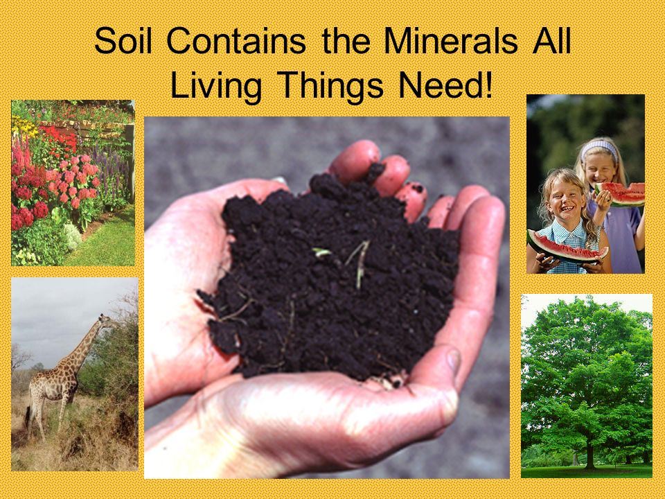 Soil Contains the Minerals All Living Things Need!