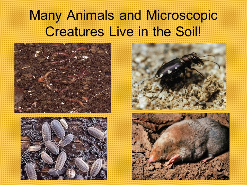 Many Animals and Microscopic Creatures Live in the Soil!