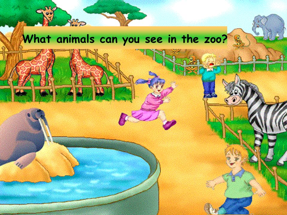What animals can you see in the zoo