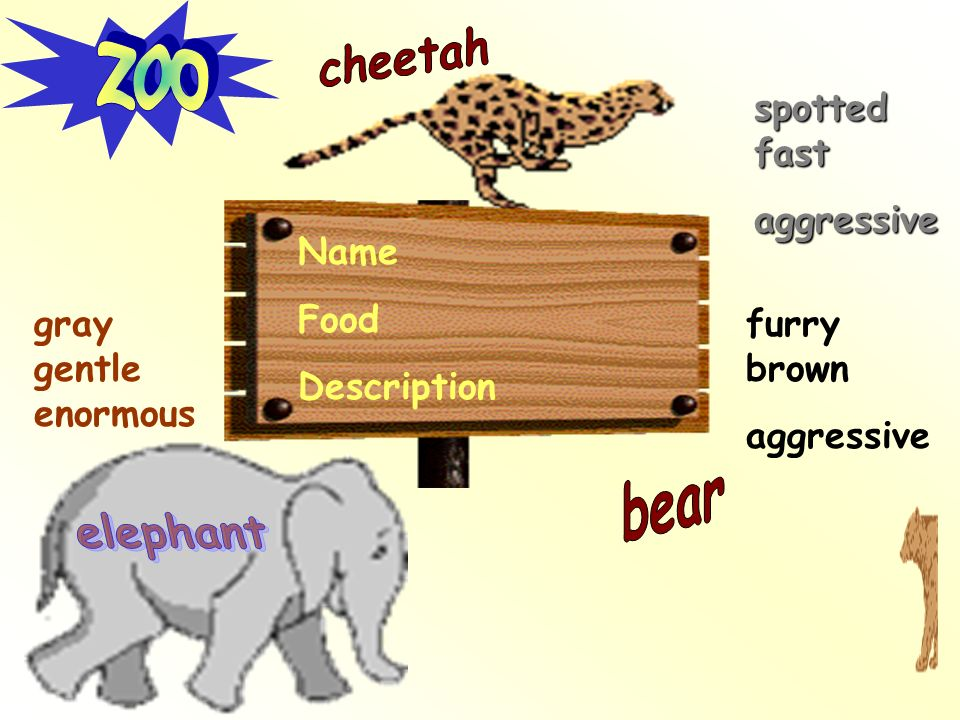 zoo cheetah bear elephant spotted fast aggressive Name Food