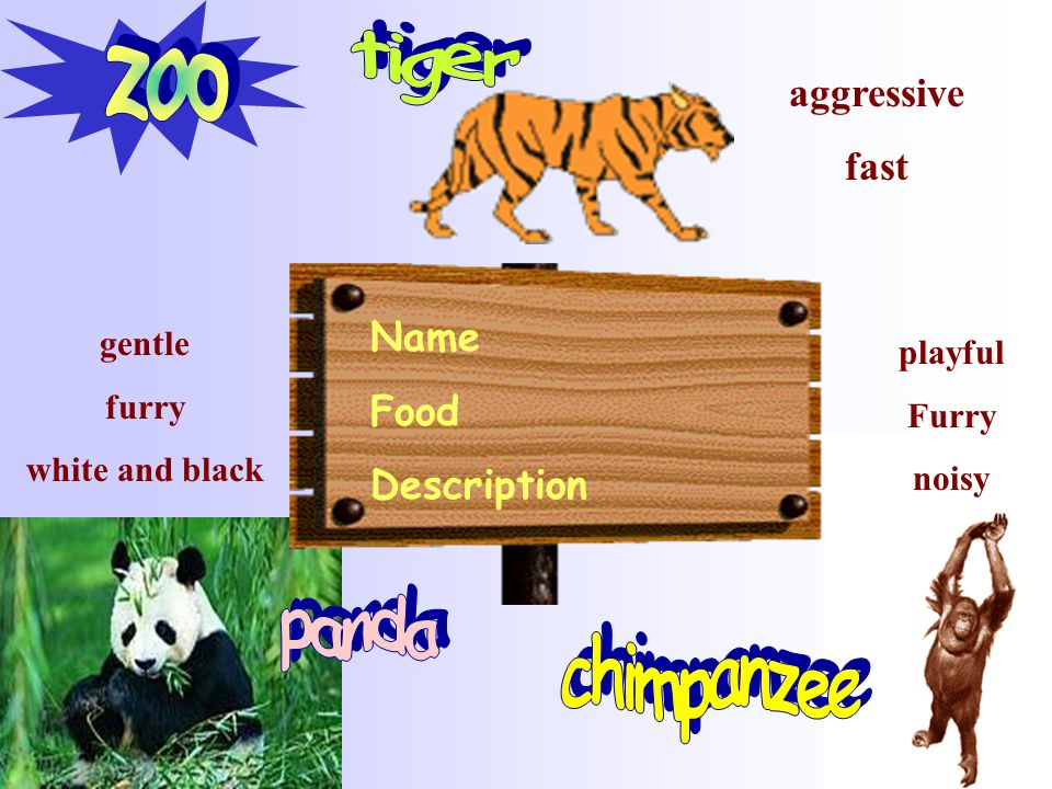zoo tiger panda chimpanzee aggressive fast Name Food Description
