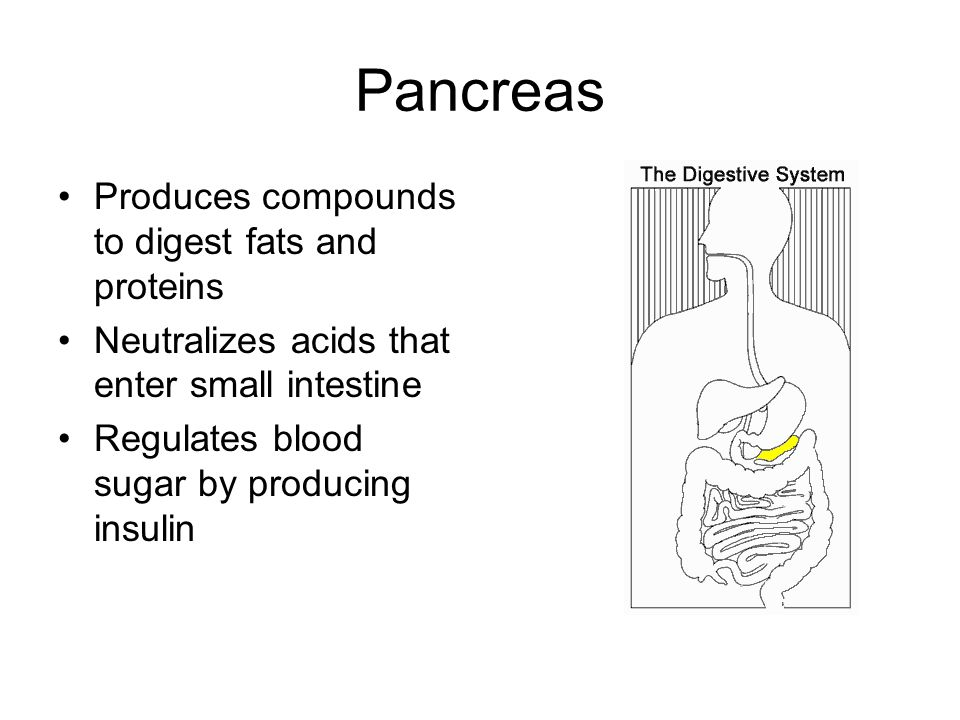 Pancreas Produces compounds to digest fats and proteins