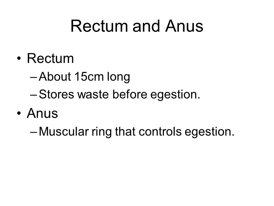 Rectum and Anus Rectum Anus About 15cm long