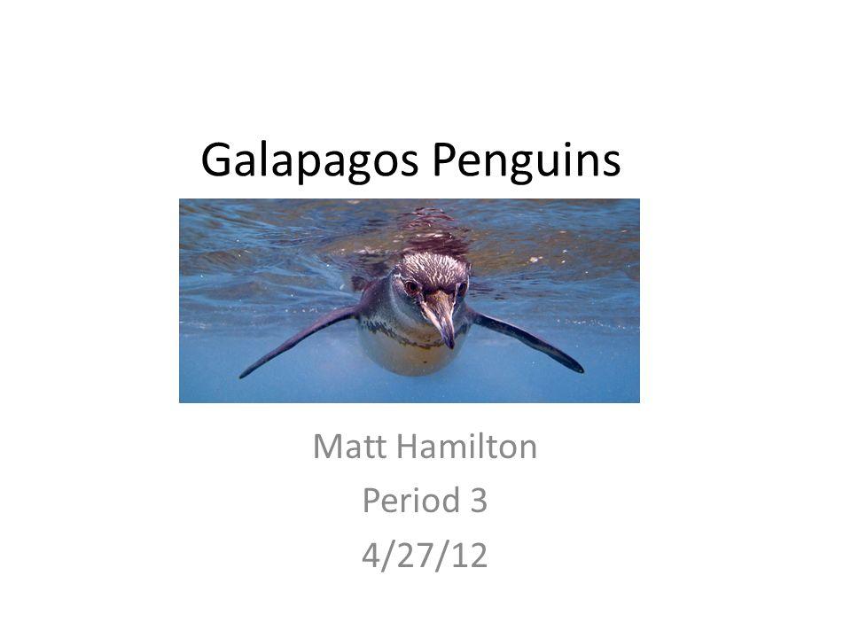 Matt Hamilton Period 3 4/27/12