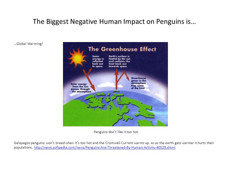 The Biggest Negative Human Impact on Penguins is…