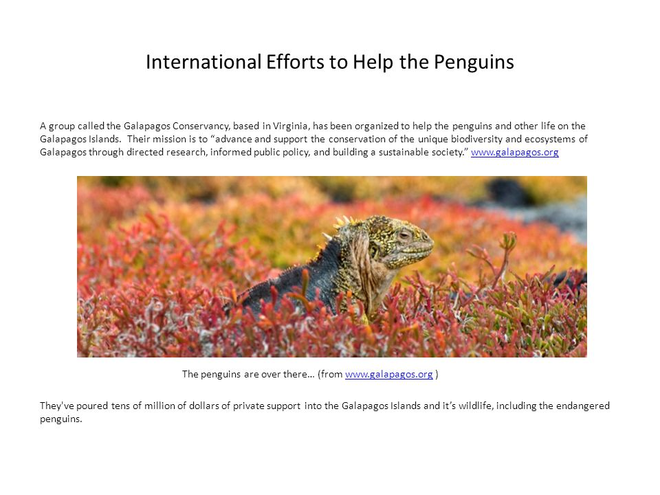 International Efforts to Help the Penguins