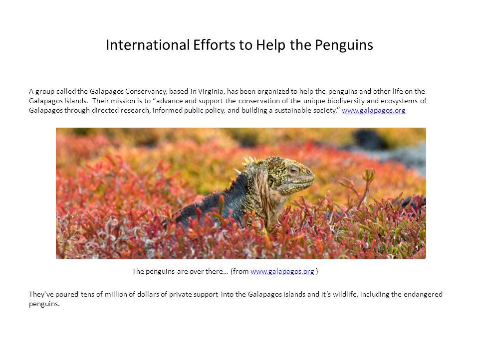 International Efforts to Help the Penguins