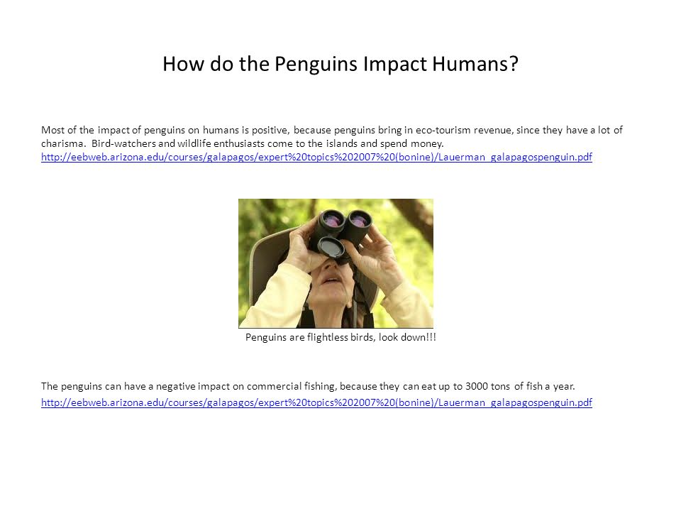 How do the Penguins Impact Humans