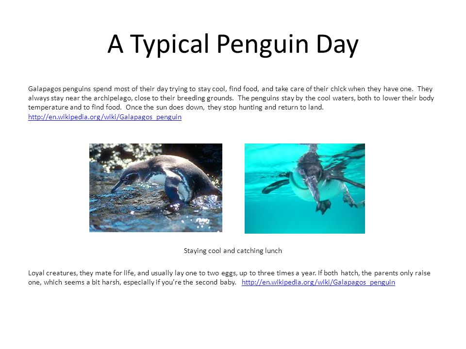 A Typical Penguin Day