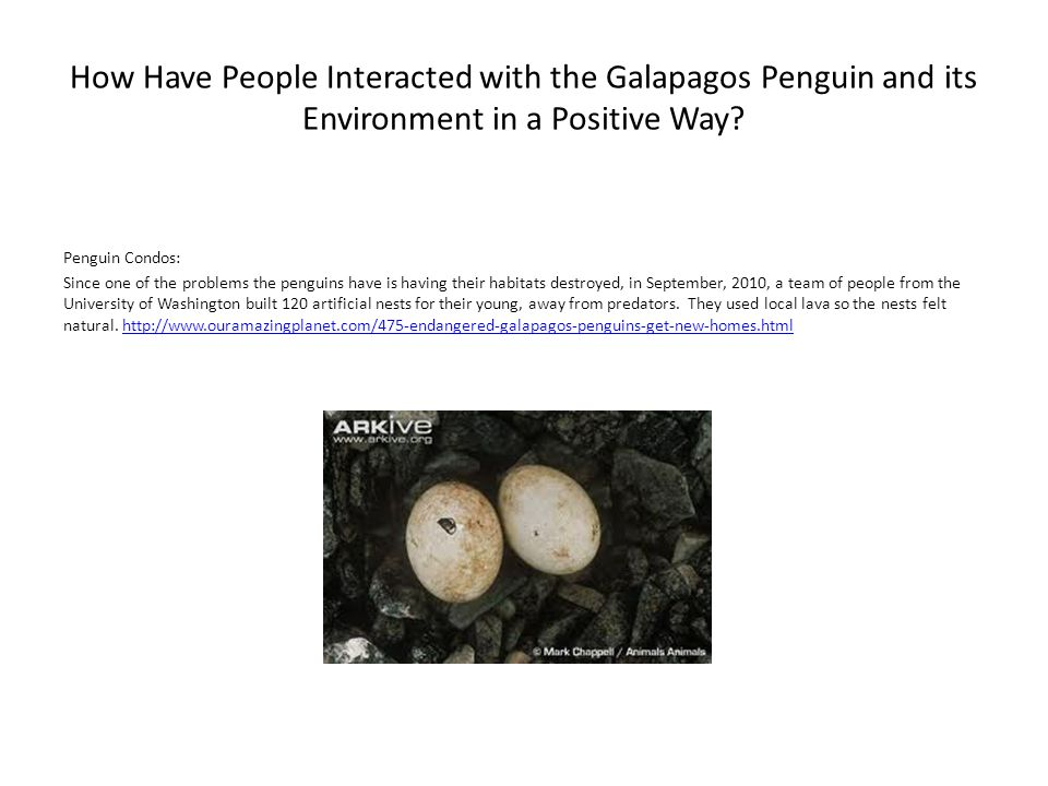 How Have People Interacted with the Galapagos Penguin and its Environment in a Positive Way