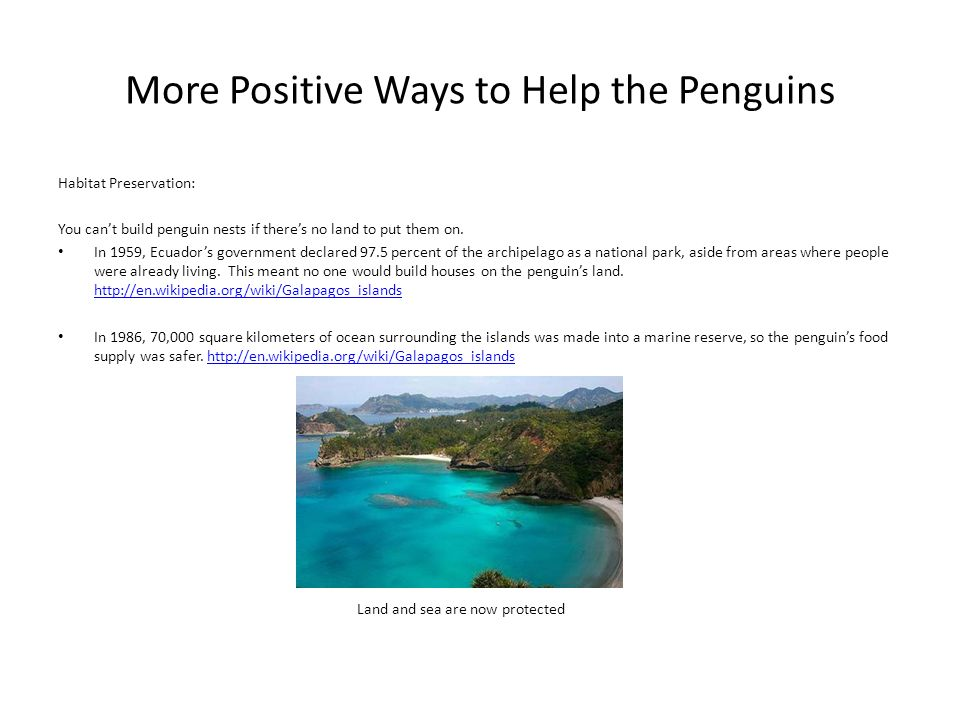 More Positive Ways to Help the Penguins