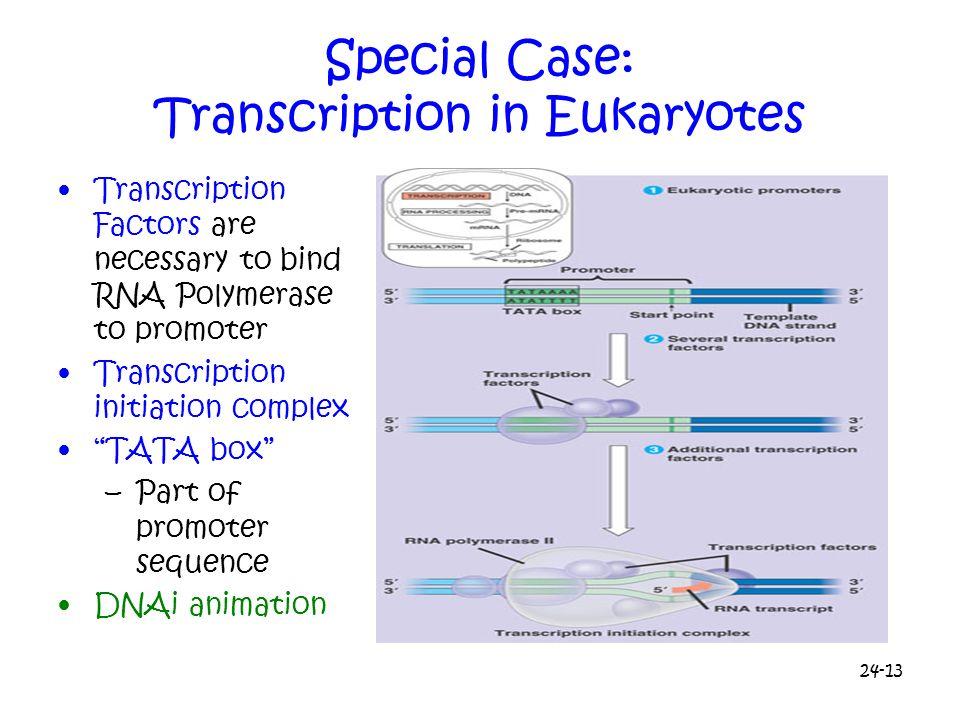 Special Case: Transcription in Eukaryotes