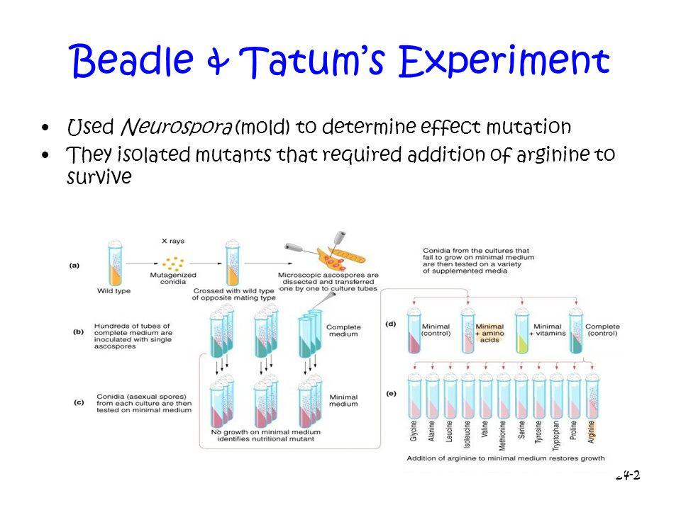 Beadle & Tatum's Experiment