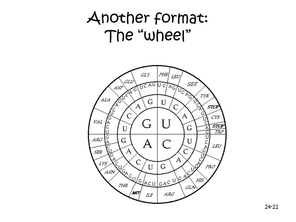 Another format: The wheel