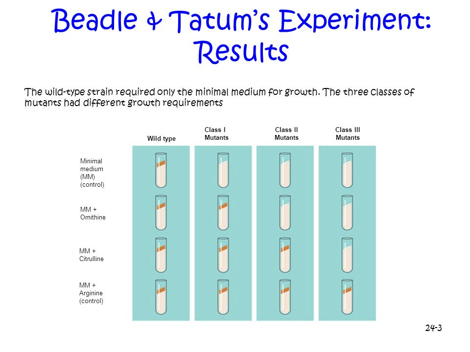 Beadle & Tatum's Experiment: Results