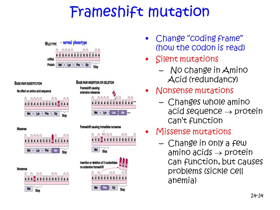 Frameshift mutation Change coding frame (how the codon is read)