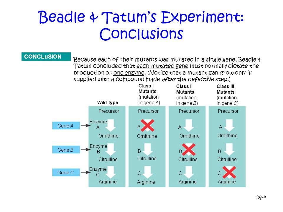 Beadle & Tatum's Experiment: Conclusions